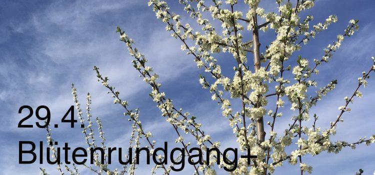 Blütenrundgang und Wildbienen Beobachtung